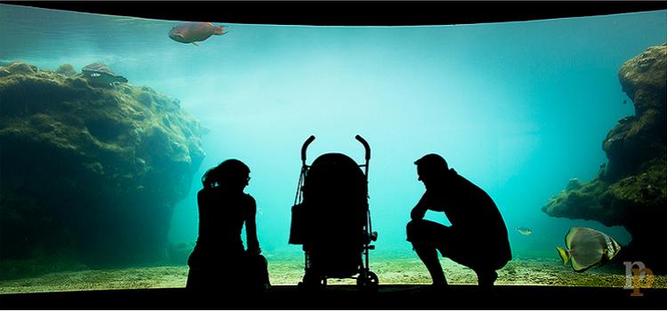 Encontrando nuevas funcionalidades en la crianza de nuestros hijos