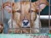 La psicopatología detrás de la violencia hacia los animales