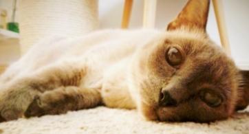El gato, el pasillo y la zona de confort