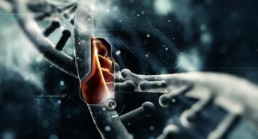 ¿Qué es la Epigenética Conductual?
