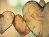 Conjugada / Un Poema de Amor