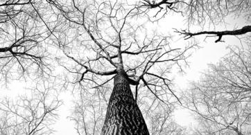 Bajo los árboles mustios de los jardines borrosos | Última Elegía