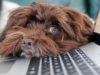 ¿Cómo se manifiesta el estrés laboral en el teletrabajo?